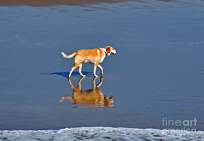 Dog On Water Mirror Art Print