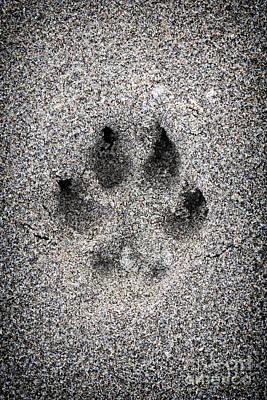 Animals Photos - Dog paw print in sand by Elena Elisseeva