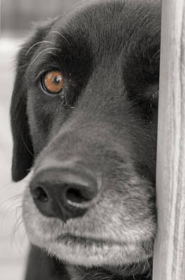 Dog Peek A Boo Art Print