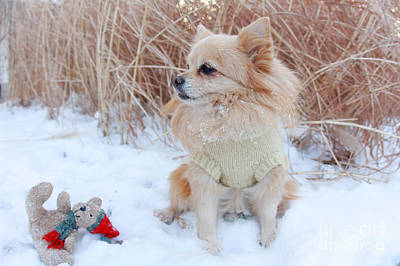 Photograph - Dog Playing In Snow by Charline Xia