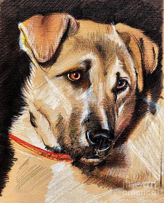 Drawing - Dog Portrait Drawing by Daliana Pacuraru