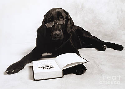 Photograph - Dog Reading James Thurber by Frederica Georgia
