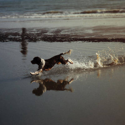 Photograph - Dog Running by John Magnet Bell