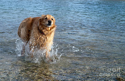Dog Running Art Print