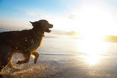 Dog Running On The Beach Art Print by Giovani Cordioli
