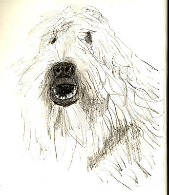 Drawing - Dog by Sandy McIntire