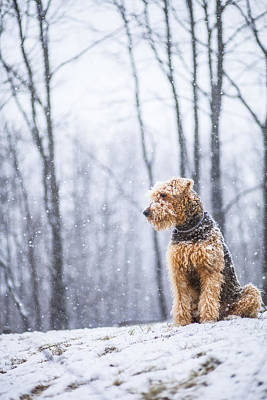 Dog Sits Under The Snowfall Art Print