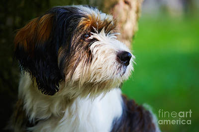 Animals Royalty-Free and Rights-Managed Images - Dog sitting next to a tree by Nick  Biemans