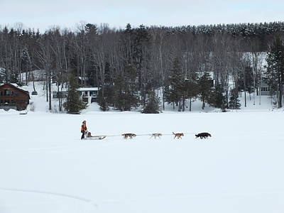 Photograph - Dog Sled 1 by Gene Cyr