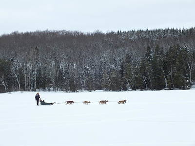 Photograph - Dog Sled 2 by Gene Cyr