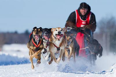 Dog Sledding Race Print by Mircea Costina Photography