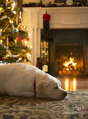 Dog Sleeping By The Christmas Tree Art Print by Diane Diederich