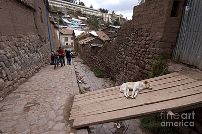 Dog Sleeping In Alley Art Print by William H. Mullins