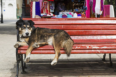 Best Friend Photograph - Dog Sleeping On A Red Bench Punta by Remsberg Inc