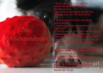 Massage Photograph - Dog Ten Commandments by Stelios Kleanthous