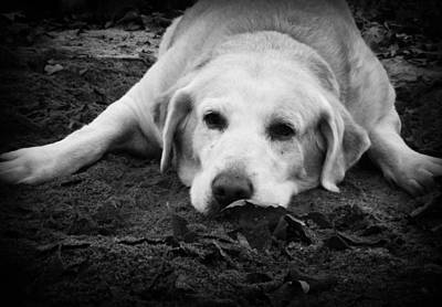 Photograph - Dog Tired by Kelly Hazel