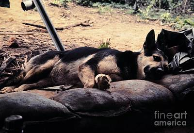 Photograph - Dog Tired by Mel Steinhauer