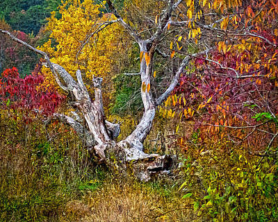 Digital Art - Dog Tree by Mary Almond