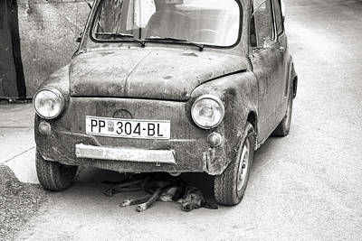 Photograph - Dog Under Car Prilep by For Ninety One Days