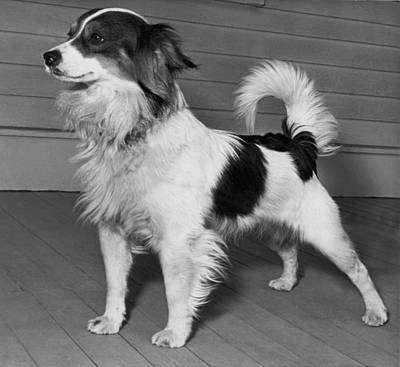 Adoption Photograph - Dog Up For Adoption by Underwood Archives