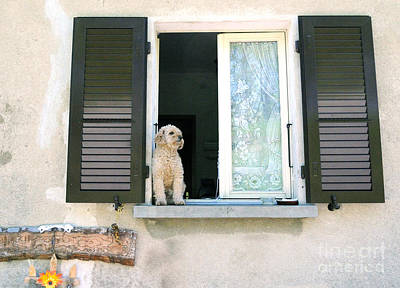 Photograph - Dog Waiting For Owner by Haleh Mahbod