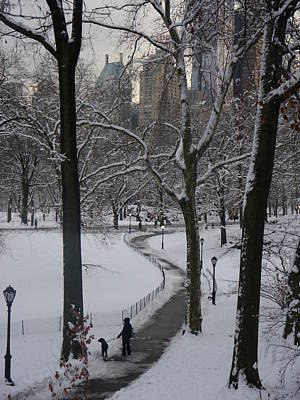 Photograph - Dog Walking In A Snowy Central Park by Winifred Butler