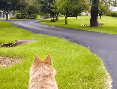 Digital Art - Dog Watching Dogs by Susan Stone