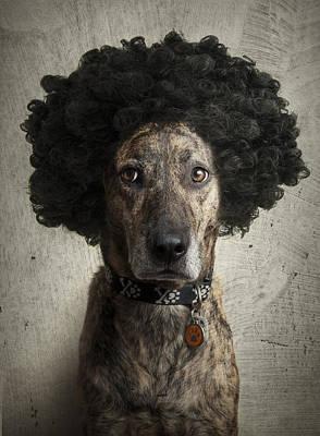 Dog With A Crazy Hairdo Art Print by Chad Latta