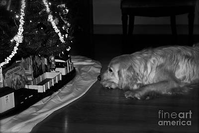 Frank J Casella Royalty-Free and Rights-Managed Images - Dog with Christmas Train by Frank J Casella