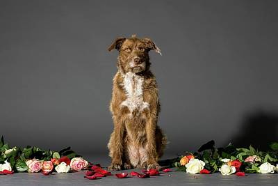 Dog With Flowers Art Print