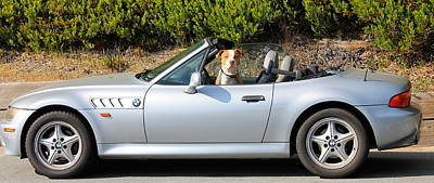 Photograph - Top Down Dog by Michael Cervin