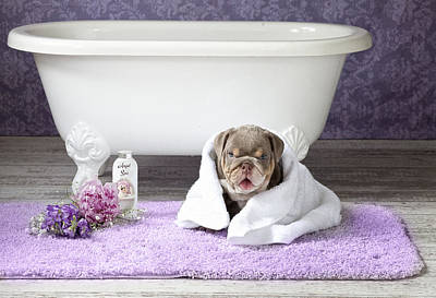 Bath Time Painting - Dog With Towel 2 by Lisa Jane