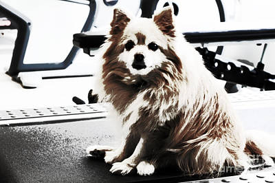 Photograph - Doggie No Need For Treadmill by Charline Xia