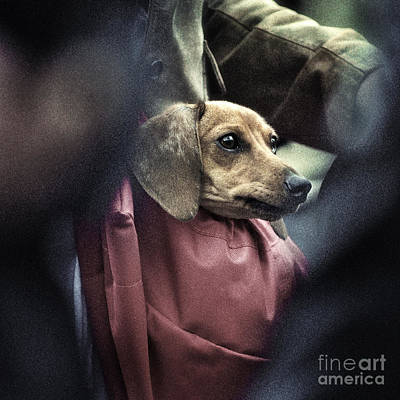 Doggie's Bag Art Print by Michel Verhoef