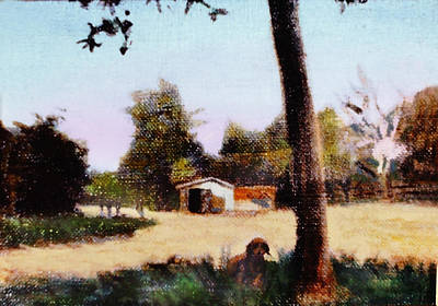 Sonora Painting - Doggin The Shade by David Zimmerman