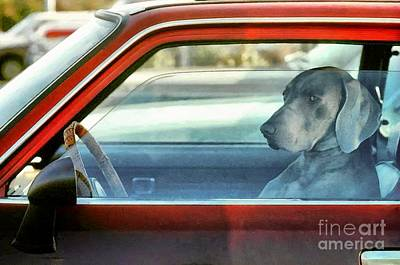 Kim Fearheiley Photography - Doggy driver by Vincent Monozlay