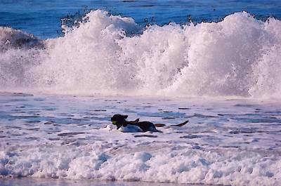 Dogs At Carmel California Beach Art Print by Barbara Snyder