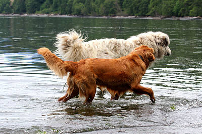 Photograph - Dogs At Play - Best Friends by Marie Jamieson