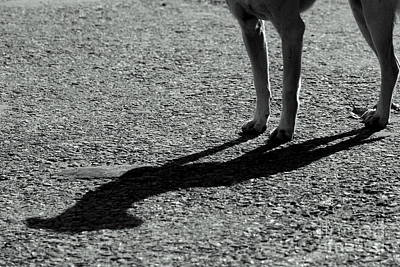 Photograph - Dog's Company by Vishakha Bhagat