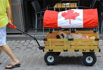 Photograph - Dog's Life In Canada by Kume Bryant