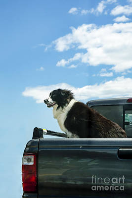 Dogs Love Trucks Art Print by Diane Diederich