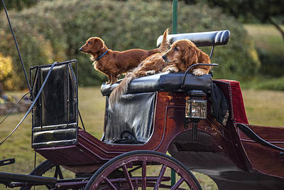 Dogs Of The Carriage Art Print