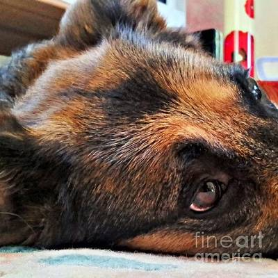 Head Photograph - #dogs #pawsforthought #ilovemydog by YoursByShores Isabella Shores