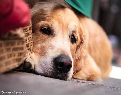 Photograph - Dog's Sorrow by Stwayne Keubrick