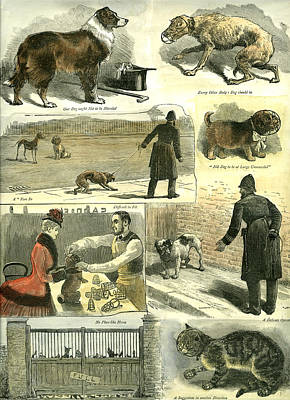 Police Dog Drawing - Dogs U.k. Police Regulations 1885 Cat Man Woman Hat Cane by English School