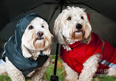 Animals Photos - Dogs under umbrella by Elena Elisseeva