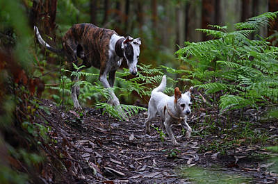 Greyhound Photograph - Dogs Walking In Forest by Nano Calvo