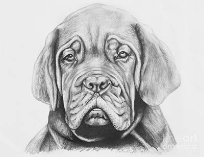 Pup Drawing - Dogue De Bordeaux Dog by Lena Auxier