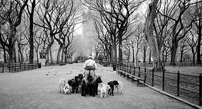 Photograph - Dogwalker On The Mall by Cornelis Verwaal