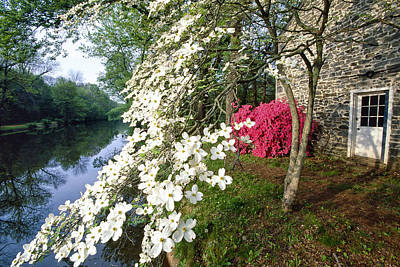 Dogwood And Azalea Bloom Art Print by George Oze